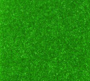 Indoor/Outdoor Carpet:Prairie